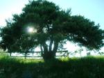 Langhe-Monferrato e i suoi alberi