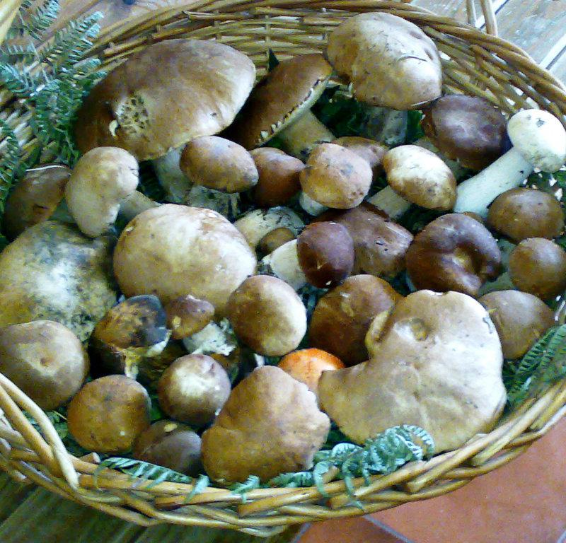 Funghi del bosco Arbrisan