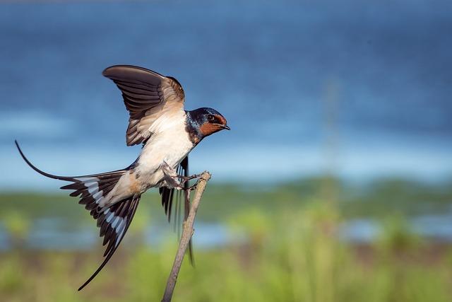 Uccello come cognome