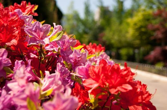 Asti: Fiera dei fiori