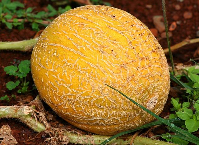 Melone è anche un Cognome
