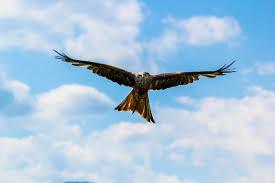 Aquila visto come cognome(Gian)