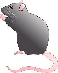Ratto e topo(Gian)