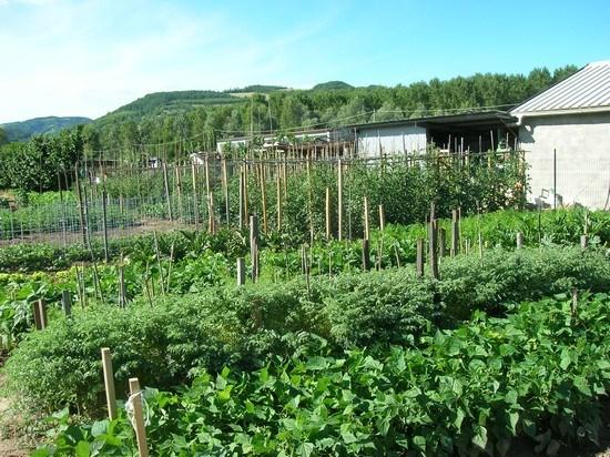 Vegetazione in piena attività