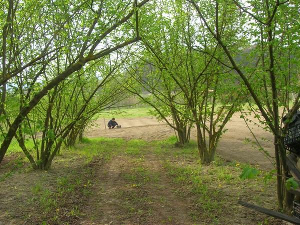 Viale di nocciole che da l'accesso all'orto di Davide che si vede in fondo alle prese con la semina delle patate
