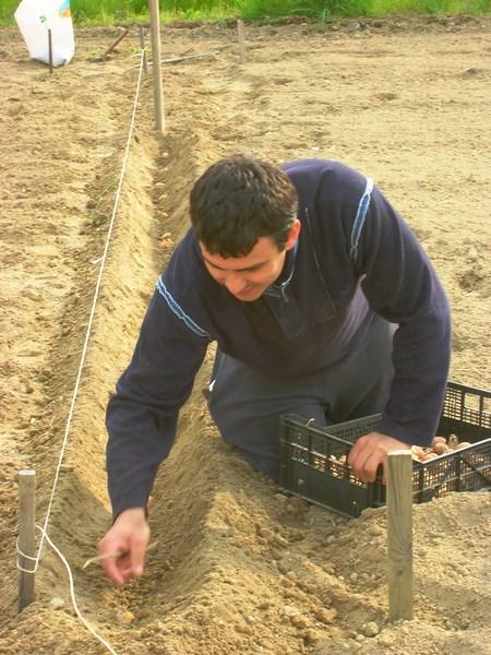 Aprile 2013: Davide intento alla semina delle patate