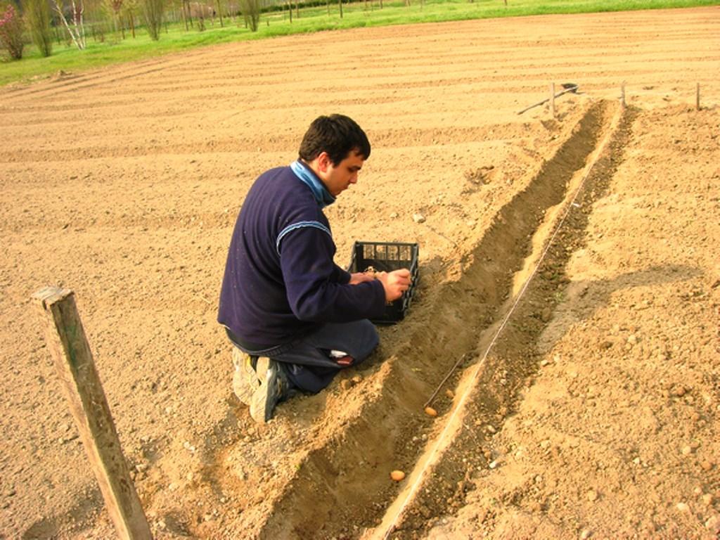 Aprile 2013: un'altra immagine di Davide mentre dispone nel solco le patate da semina