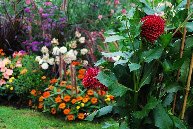 Flora-Orticoltura