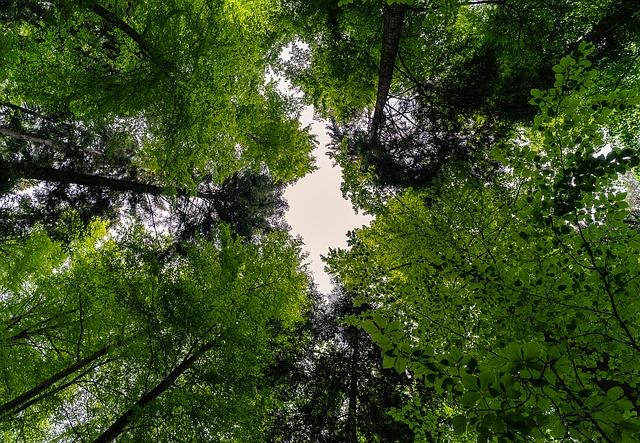 Canopia di una foresta come Cognome