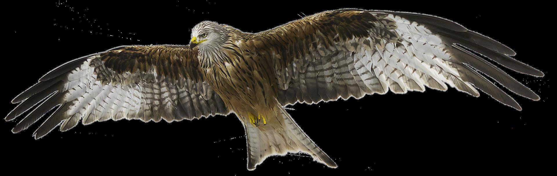 Falco come cognome