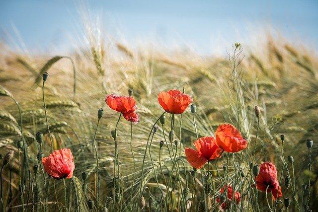 Bio agricoltura